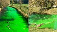 Farbe ins Wasser gekippt?: Fluss Dreisam schimmert giftgrün