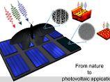Hier grafisch dargestellt: die löcherige Struktur der Flügelschuppen, die die Forscher auf Solarzellen übertragen haben.