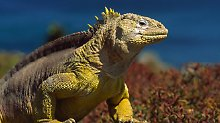 Touristen greifen in Natur ein: Galapagosinseln sind ein bedrohtes Paradies