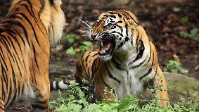 National Geographic: Fight Club der Tiere - Tropische Gefechte