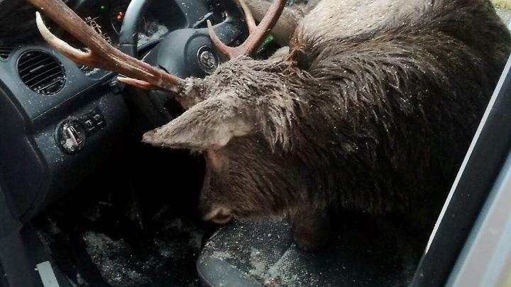 Das Tier verendete im Wageninneren.