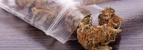 Cannabis auf Rezept: Darf man bekifft hinters Steuer?
