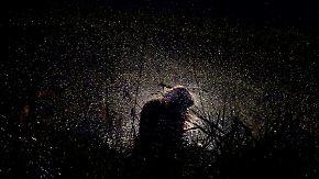 Dienstag milder aber grau: Regen durchnässt frostfreie Nacht
