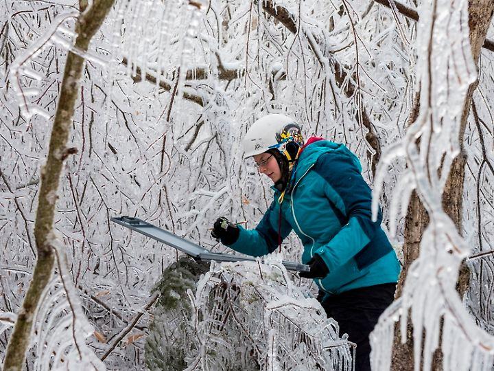 Messung der Eisdicke an einem Baum im Hubbard Brook Experimental Forest.