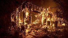 Buschfeuer in Kalifornien: Dutzende Rennpferde verenden in Flammen