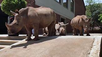 Tierschutzprojekt in Südafrika: Auffangstation bietet verwaisten Nashornbabys neues Zuhause