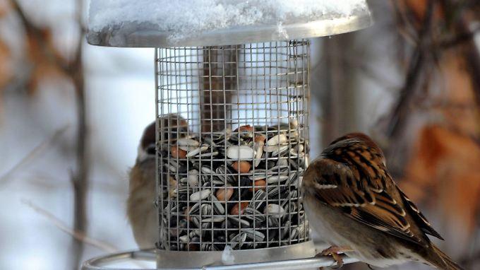 Solche Futtersäulen haben gegenüber Häuschen den Vorteil, dass kein Vogelkot ins Futter gelangt.
