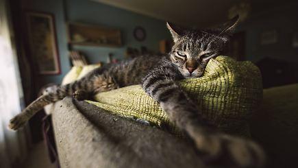 Der tag mann lebte mit 55 toten katzen in wohnung n for Wohnung dekorieren mit katzen