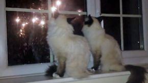 Empfindliche Ohren an Silvester: So überstehen Haustiere die lauteste Nacht des Jahres
