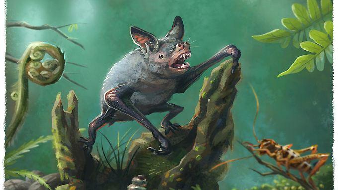 Die Zeichnung zeigt die Große Neuseelandfledermaus (Mystacina robusta), eine im letzten Jahrhundert ausgestorbene Fledermaus aus Neuseeland. Sie ist mit der neu entdeckten Fledermaus verwandt.