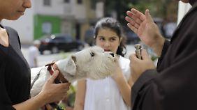 Auch in Brasilien lassen Hundebesitzer ihre Tiere segnen, allerdings am Tag des heiligen Franz von Assisi.