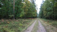 Waldweg in der Göhrde.