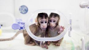 Eine fragwürdige Sensation: Chinesische Forscher klonen erstmals Affen