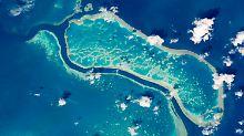 Krankheitsrisiko steigt enorm: Plastikmüll lässt Korallen schneller erkranken
