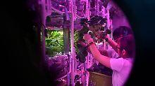 Studenten leben wie auf dem Mond: China plant Langzeitaufenthalte im All