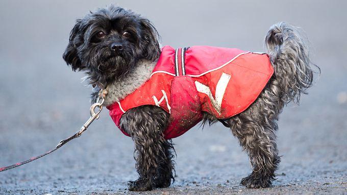 Ein Hund kann keine eidesstattliche Erklärung abgeben (nachgestellte Szene).
