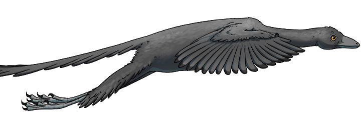So könnte es ausgesehen haben: Archaeopteryx im Flug.