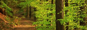 400 Bäume pro Mensch: Wälder - die grünen Lungen der Erde