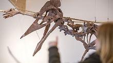 """So groß wie ein Segelflugzeug: Museum stellt Riesensaurier """"Dracula"""" aus"""