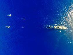 1,6 Millionen Quadratkilometer: Pazifik-Müllstrudel viel größer als vermutet