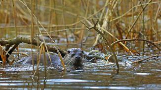 Fast alle Gewässer in schlechtem Zustand: Artenvielfalt in deutschen Flüssen verschwindet