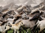 Die Römer schlugen einen neuen Weg bei der Pferdezucht ein. Damit ging die Vielfalt bei den männlichen Tieren verloren.
