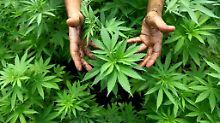 Anbauen, verkaufen, konsumieren: Kanada legalisiert Cannabis