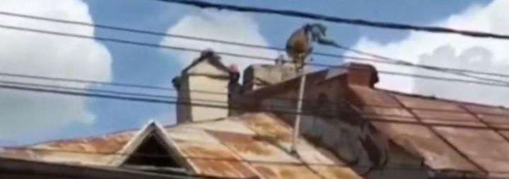 Kaum zu glauben, aber wahr: Ausgebüxter Affe hält rumänische Stadt auf Trab