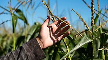 USA erteilen Genehmigung: Weg für Bayers Monsanto-Übernahme ist frei