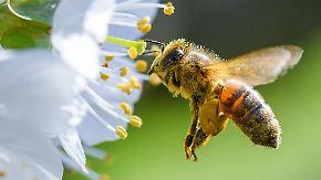 Startup News, die komplette 79. Folge: Mietbienen begeistern Unternehmen und Hobby-Imker
