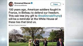 n-tv Netzreporter: Internet amüsiert sich über verschwundenen #Macron-Baum