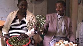 Eine Pflanze gegen HIV: Pharmaindustrie entdeckt die botswanische Heilkunst