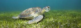 Tag der biologischen Vielfalt: Tierische Erfolgsgeschichten und die Rettung eines Baumes