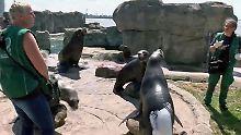Seelöwen-Sonnenschutz, volle Freibäder: Hochsommer-Freude grenzt an sengend heiße Gefahr
