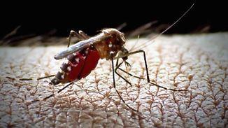 Explosionsartige Ausbreitung: Deutschland steht eine Mückenplage bevor