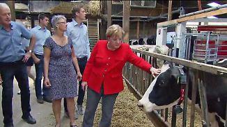 """""""Der Versuch, glaubwürdig zu wirken"""": Merkel trifft Milchbauern und Kuh """"Mareike"""""""