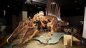 n-tv Dokumentation: Urzeit-Riesen - Meeres-Ungeheuer