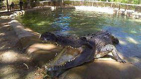 n-tv Dokumentation: Tierisch tödlich - Willkommen in Australien 1