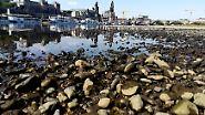 Folge der Dauerhitze: Deutschlands Flüsse trocknen langsam aus