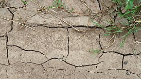 Forderung nach Soforthilfe: Warum kaum ein Landwirt gegen Dürre versichert ist
