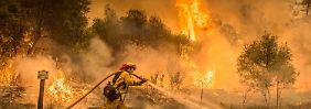 Größter Brand der Geschichte: Feuer in Kalifornien breiten sich rapide aus
