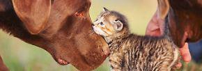 Gute Gründe für die Tierliebe: Die Katze - das beliebteste Haustier Deutschlands