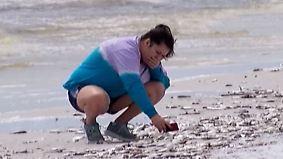 """Erschreckende Bilder aus Florida: """"Rote Flut"""" spült Tausende tote Fische an den Strand"""