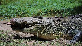 n-tv Dokumentation: Tierisch tödlich - Willkommen in Australien 7