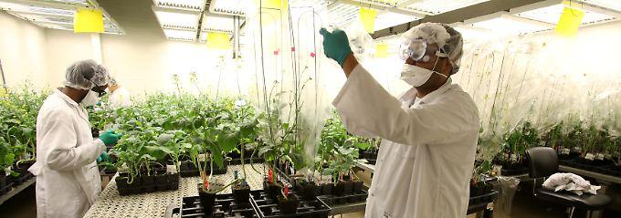 Klagen und Börsen-Panik: Ist der Monsanto-Deal für Bayer eine Gefahr?