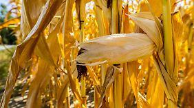 Ernteausfall wegen Dürre: Landwirte bekommen 340 Millionen von Bund und Ländern