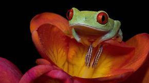 National Geographic: Verrückte Tierwelt - Tierische Genies