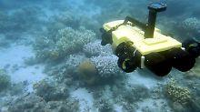 Tod den gefräßigen Seesternen: Killer-Roboter bekämpft Dornenkronen