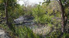 Lagunen, Sümpfe, Mangrovenwälder: Feuchtgebiete gehen stark zurück