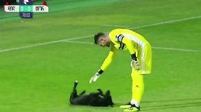 Kaum zu glauben, aber wahr: Tierischer Flitzer mischt Fußballspiel auf